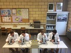 Junior Wetenschapsolympiade