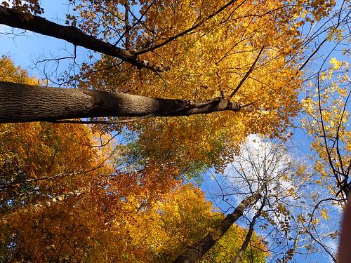 autumn newyork leaves unitedstates walk hamilton thursday tough tg4 originalworks colgateuniversity thiopheneguy olympustg4 olympusstylustg4 olympustoughtg4 utata:project=tw495