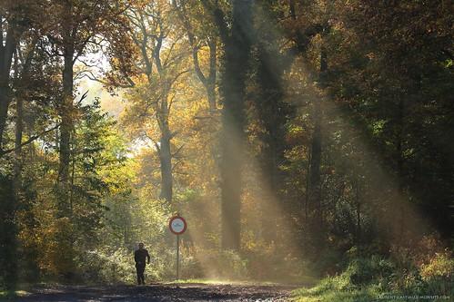 light sunlight fall nature forest automne canon landscape woods lumière paysage forêt bois lumièrenaturelle sousbois canoncamera canonlens telephotozoomlens télézoom