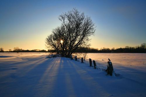 sunset winter snow field tree shadows cold ilobsterit