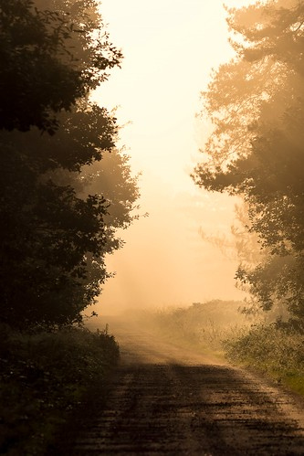 raflakenheath misty goldenhour sunrise countryside trees landscape ashleytownsend tamronsp150600mmdivcusd nikond7100 atmosphere atmospheric tree sunlight suffolk mist