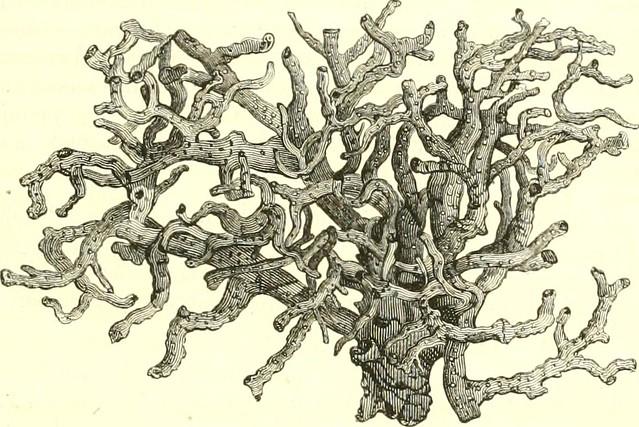 """Image from page 374 of """"Encyclopédie d'histoire naturelle, ou, Traité complet de cette science d'après les travaux des naturalists les plus éminents de tous les pays et de toutes les époques : Buffon, Daubenton, Lacépède, G. Cuvier, F. Cuvier, Geoffroy Sa"""