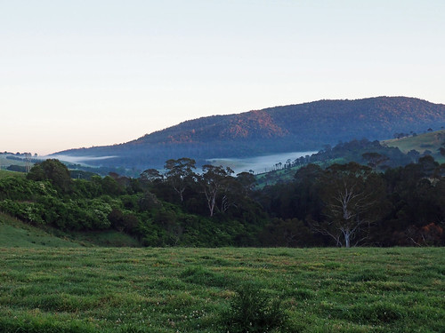 kaptainkobold scenery landscape green nsw australia mist morning field daybreak