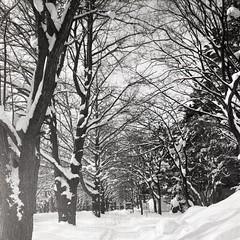 睜一隻閉一隻眼,在片刻安寧中苟且,這是人性。 苟且的惡果,又是誰在承受? 每個地方都有它的紛擾,愈平靜的假象,愈是暗湧潛伏。 ----- Film: Rollei RPX400 Camera: Rolleiflex  ----- #hokkaido #snow #blackandwhitephoto #filmphotography #istillshootfilm #rolleiflex #japan #sapporo #winter