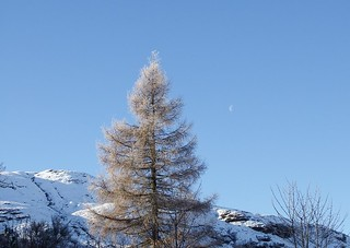 Moon in the day | by skelton_88