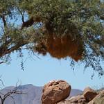 St, 03/28/2012 - 11:41 - Afrika 2012