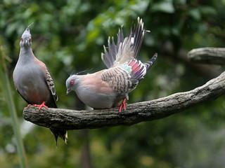 Vogelhochzeit