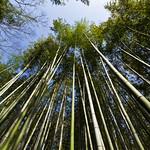 Japan-1-0015- arashiyama - Bamboo