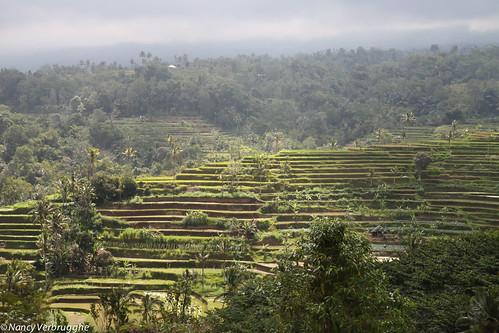 Bali   by Nancy Verbrugghe