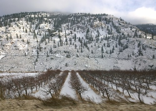 trees winter mountain snow cold weather landscape highwayone orchard rows transcanadahighway brilliant thompsonrivervalley weatherphotography