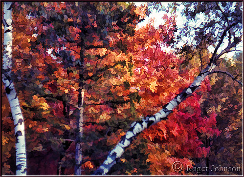 fallcolors connecticut autumncolors mapletree birchtrees glastonburyct rogerjohnson sliderssunday