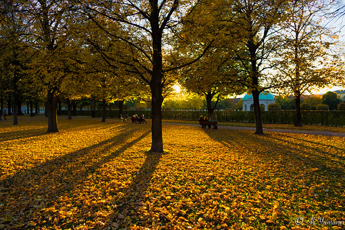 park autumn sunset fall leaves germany garden munich münchen bayern bavaria outdoor garten englisher
