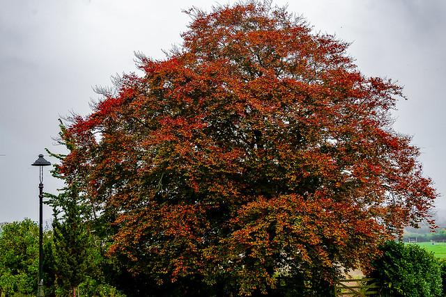A welcome burst of colour in the garden on a very grey November morning