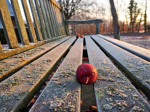 winter bench frost windfall apple withered dawn sunrise morning lichen frozen frosty december cold icy glow light