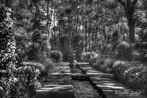 debbiegodard nikond750 blaclwhite hdr nature gardens landscape