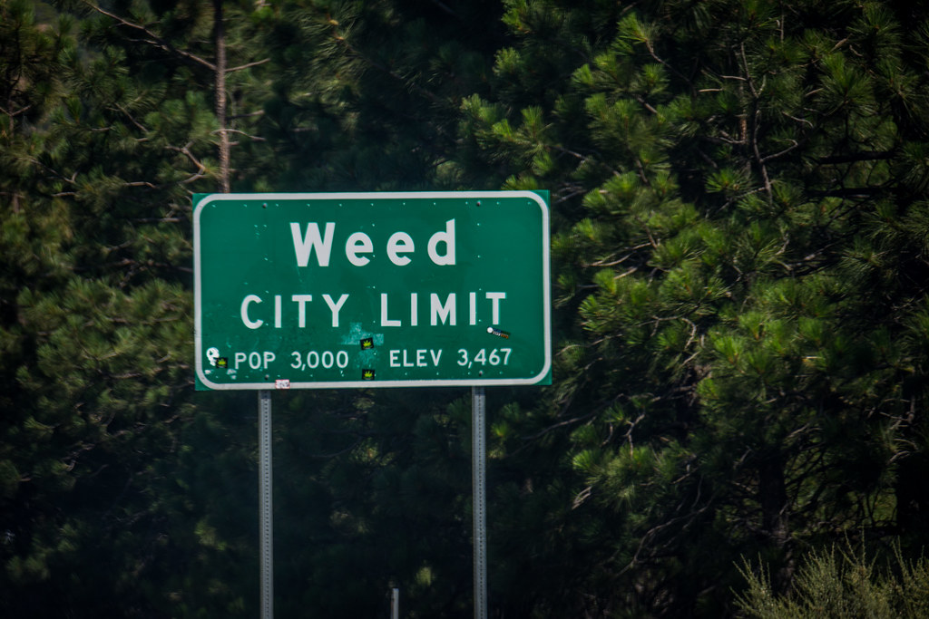 Image result for california weed