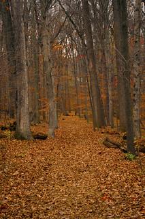 Walk With Me | by John Bense