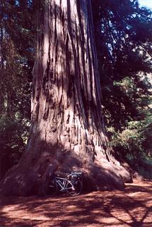46 Prairie Creek Redwoods State Park, CA