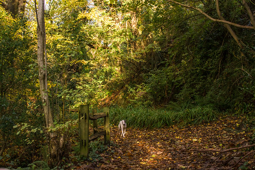 fairlightglen hastingscountrypark fencefriday fence sql autumncolours leaves trees
