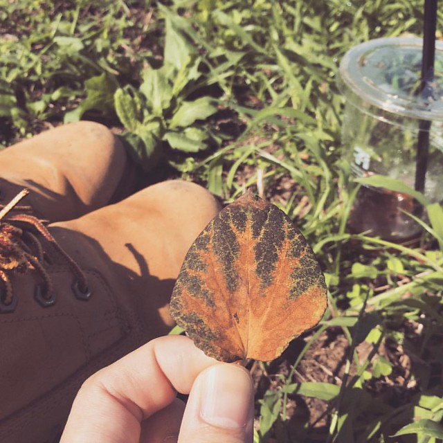 I found nicely colored leaf :) #picnic #leaf #Tokyo #park #instapic #instagood #instaphoto