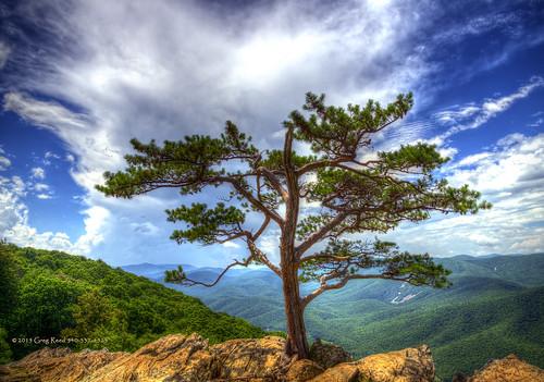 blue trees cloud tree green clouds virginia blueridgeparkway ravensroost