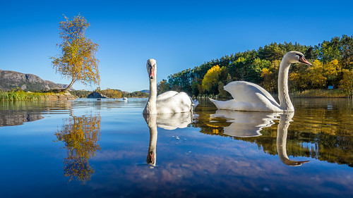 Swan lake [Explore #1]