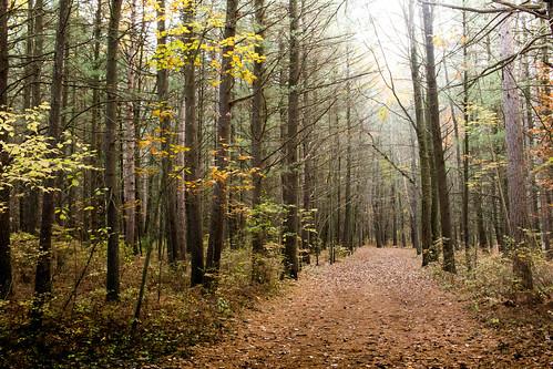 camino iluminado path dirt tree forest canon t2i lighted road twilight