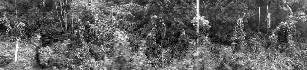 Kinetosis landscape I