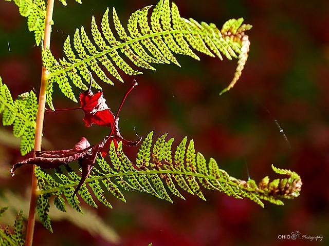 Lost autumn leaf