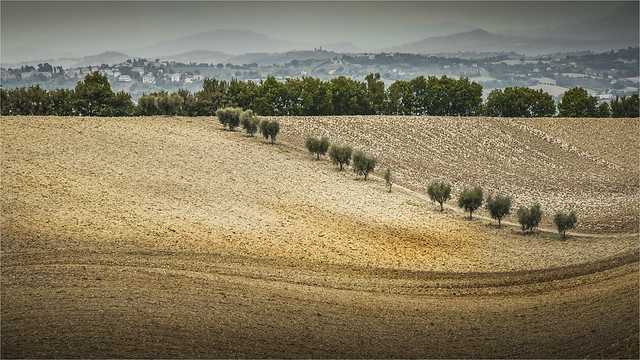 _DSC3270 Umland bei Macerata - Marche / Italia