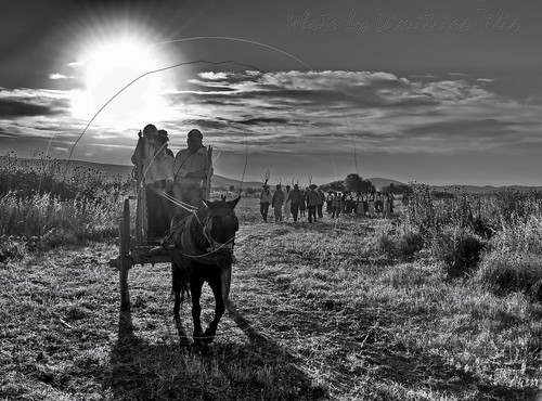 bw faneromeni μάναγήμάνακαραγκούνα tradition people animals country ruralscenes rurallife thessaly trikala hellas greece culture sunrise traditionaljobs traditionallife ruralscene villagelife countrylife oldtimes likeoldtimes villager peasant farmer champ field land lowland plain horses rural agriculture paysans char chariot charette gharry animal pelouse ciel managimanakaragkouna oldtimescountrylife personnes bétail motherearthmotherkaragkouna route extérieur
