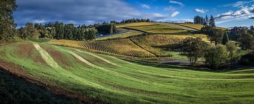 county fall oregon sunrise wine dundee country yamhill redhills depontecellars fallcolorswinecountry