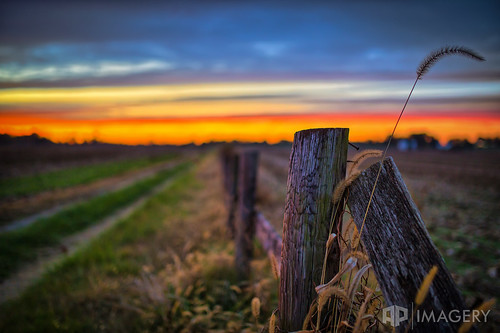 dof ky kentucky owensboro sunset country daviessco depthoffield driveway farm fence fencepost landscape rural