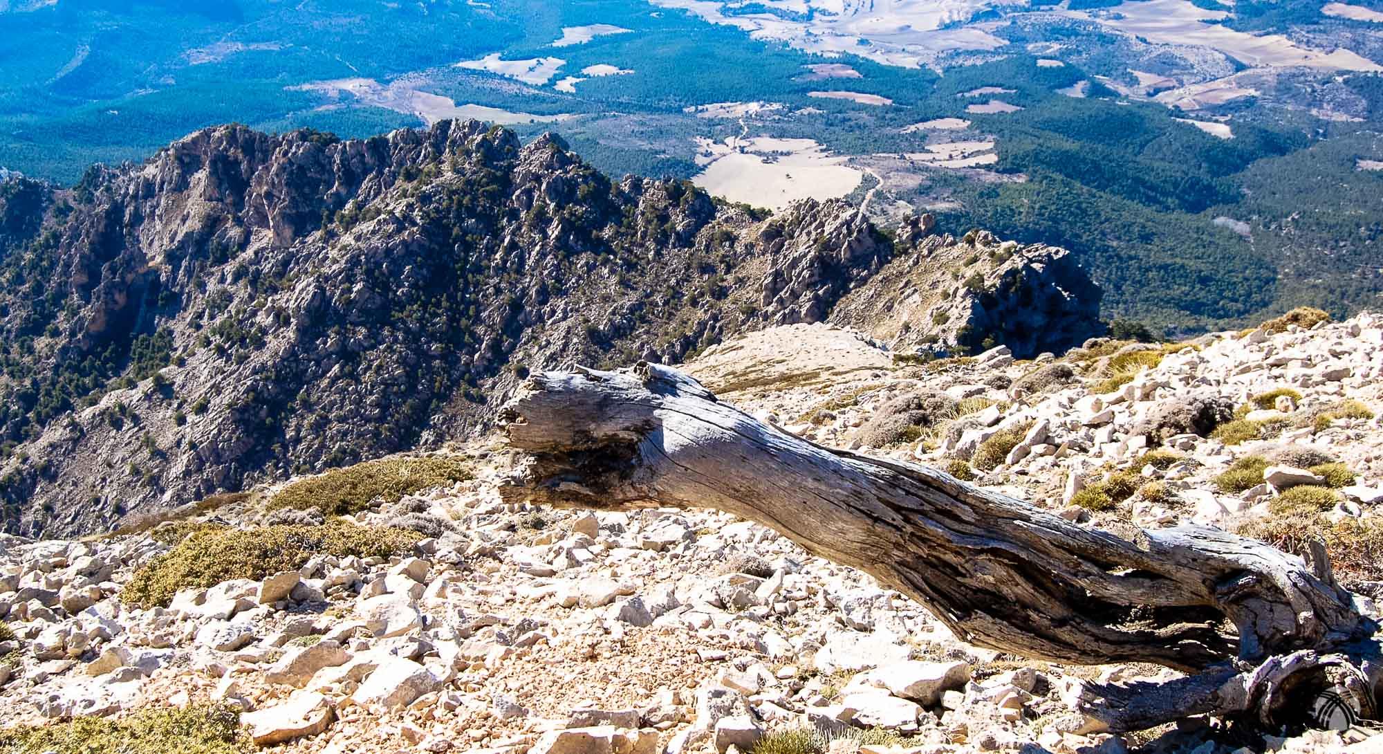 Tronco seco en primer plano y la Cresta Sur de la Sagra detrás