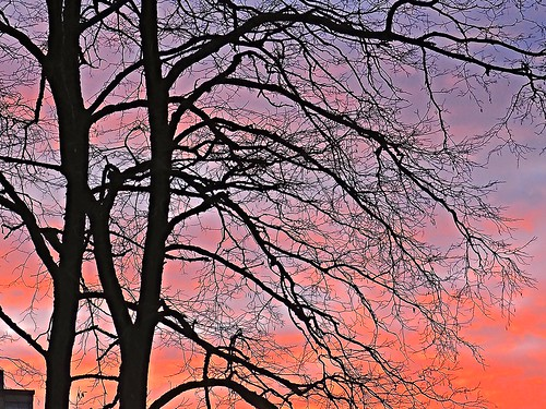 sunset sunsets sunsetskies sunsetclouds sunsetoutlines trees treesilhouettes tree treebranches treesinsunsetskies outdoors outdoor outdoorscenes outlines sky skyline skies redskies allskies wonderfulnature beautifulnature lace laceeffect smallbranches thetreeatsunset