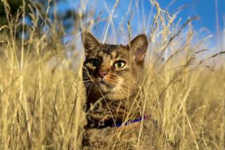 cat-10 | by koliaest