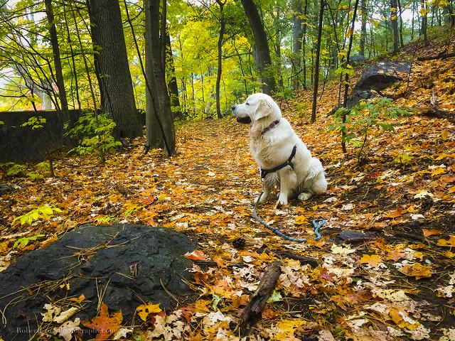 Golden New England Autumn