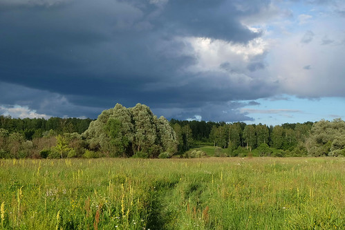 Облачная погода с прояснениями, дожди и до 25 градусов тепла ожидается 17 июля