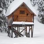 cabin_rescue
