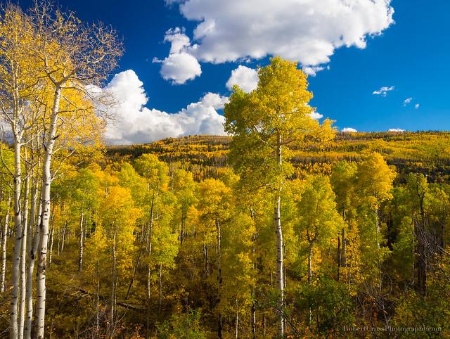 Remembering a Colorado Autumn