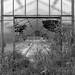 Glashäuser IV