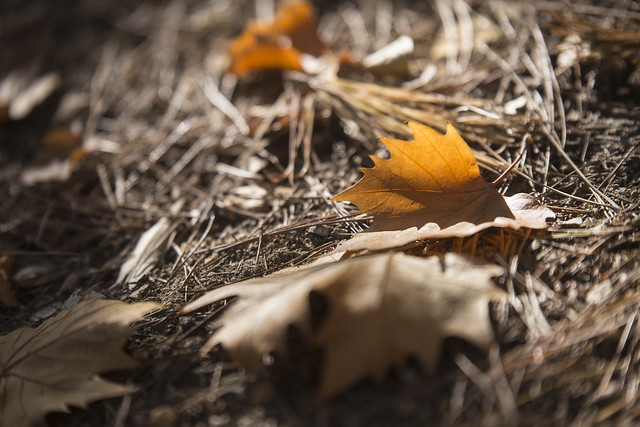 Colores de otoño II  //  Autumn Colours II