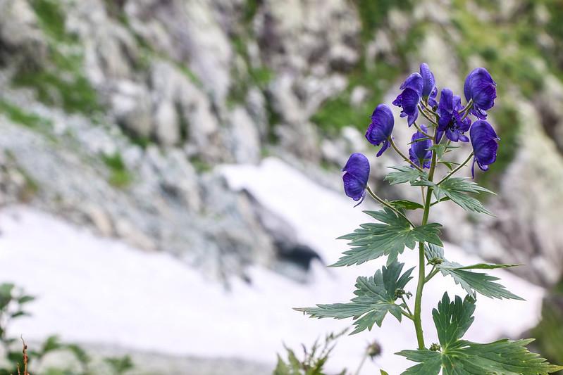 2014-09-07_00934_立山剱岳.jpg