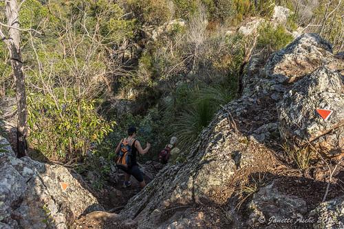 trees mountain clouds landscape rocks track rocky australia ridge trail bushwalking qld queensland bushwalk ipswich grasstrees 2015 xanthorrhoea bushwalkers seqld flinderspeak flindersgoolmanconservationestate sonya7r