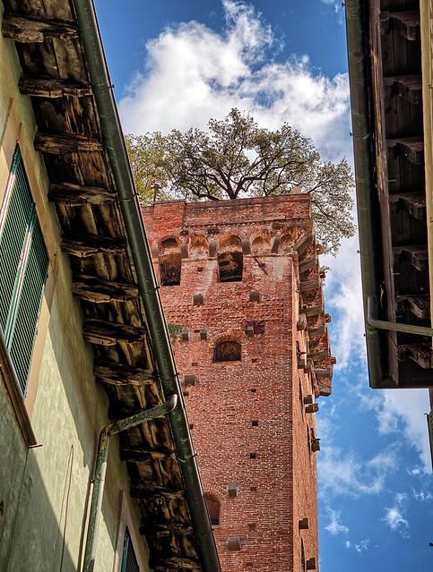 Tower of Palazzo Guinigi / Torre Guinigi (Lucca, Toscana, Italy)