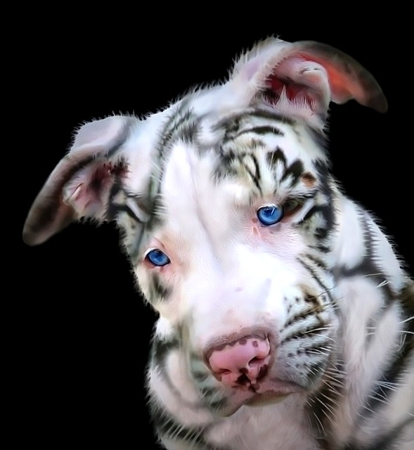 Pit Bull Puppy Dog as a White Tiger, Third Eye, Eye of the Tiger