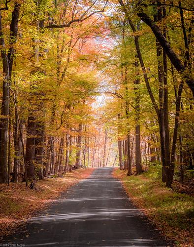 road autumn tree leaves forest olympus foliage serene f18 45mm omd m43 em10 primelens micro43 microfourthirds olympusmzuiko45mmf18 omdem10
