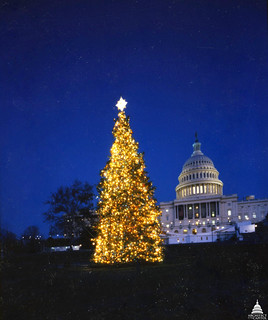 1988 U.S. Capitol Christmas Tree | by USCapitol