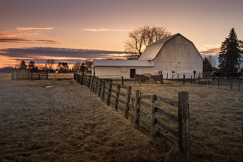 canoneos5dmarkiv morning barn farm scene amanecer sunrise michigan midmichigan february midland cows cattle grass winter clouds