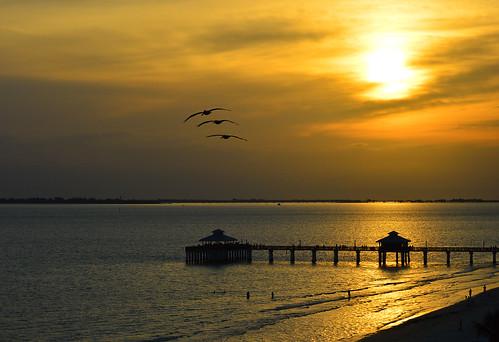 sunset sky beach birds clouds pier florida pelican fl fortmyersbeach
